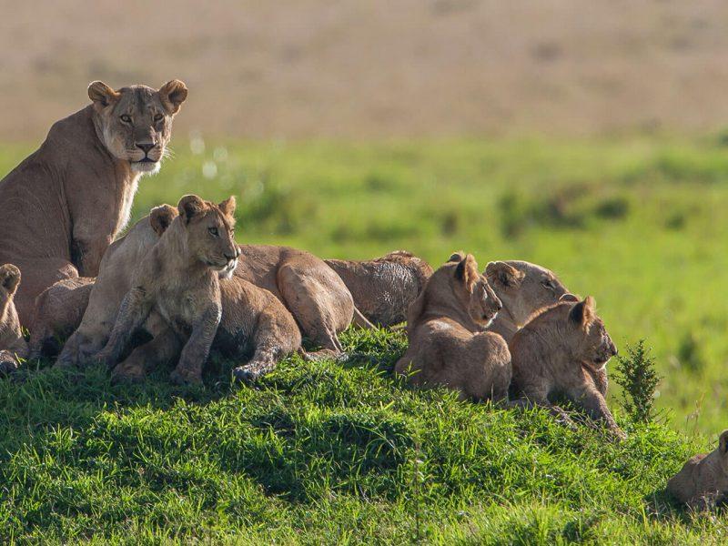 تور-بزرگ-کنیا