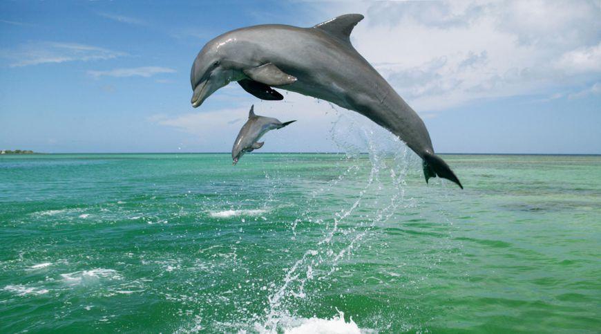 گردشگری در کیش - دلفین