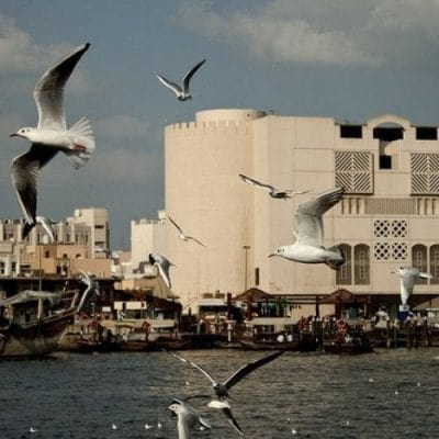 ممنوعیت های دبی
