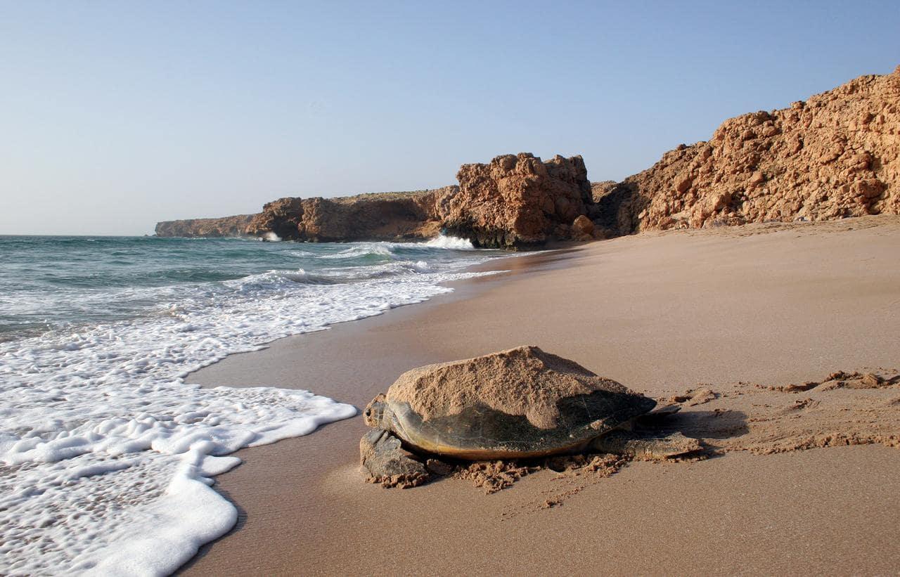 دریاچه لاکپشتها در عمان