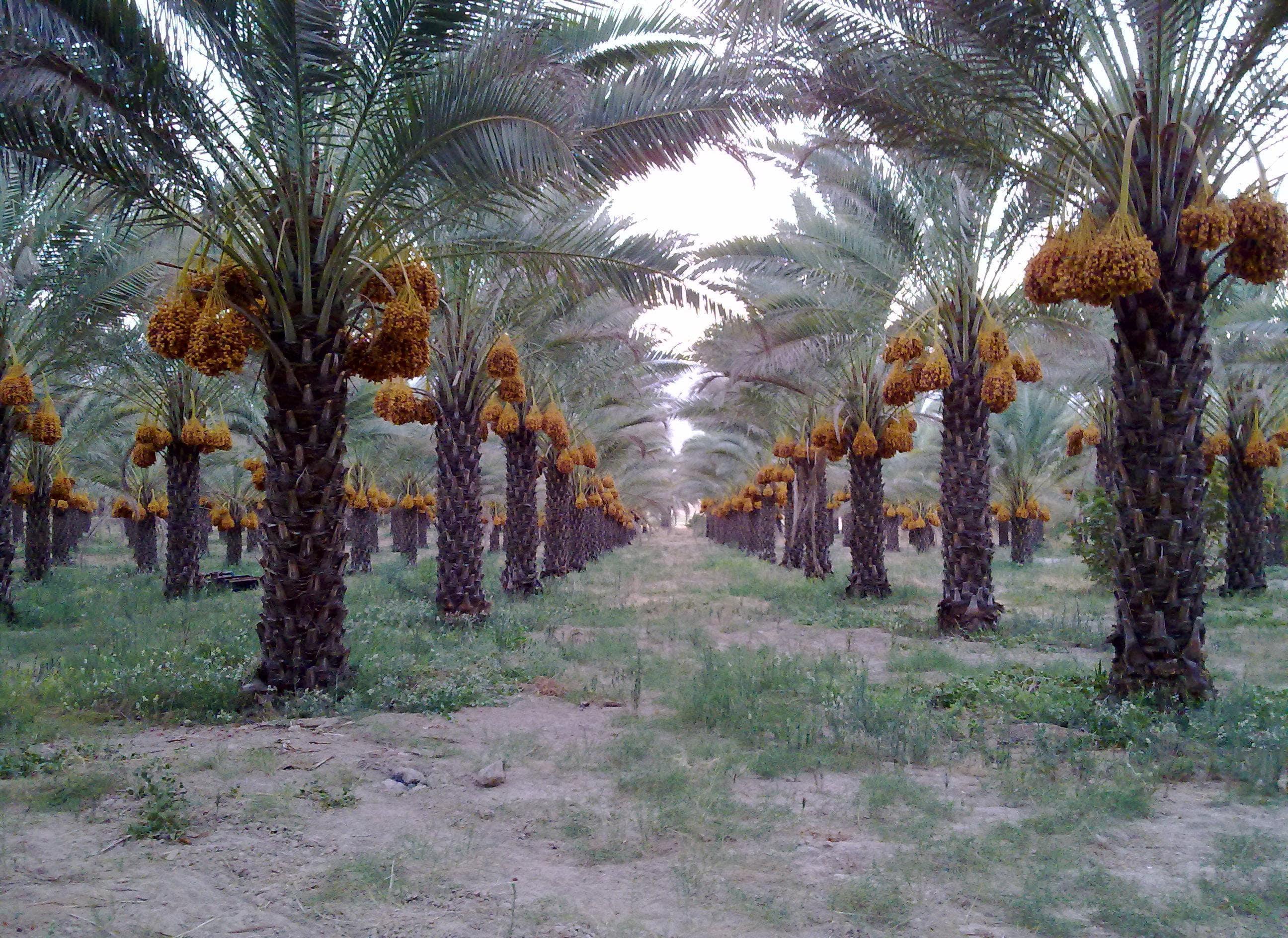 شهرستان قیر و کارزین
